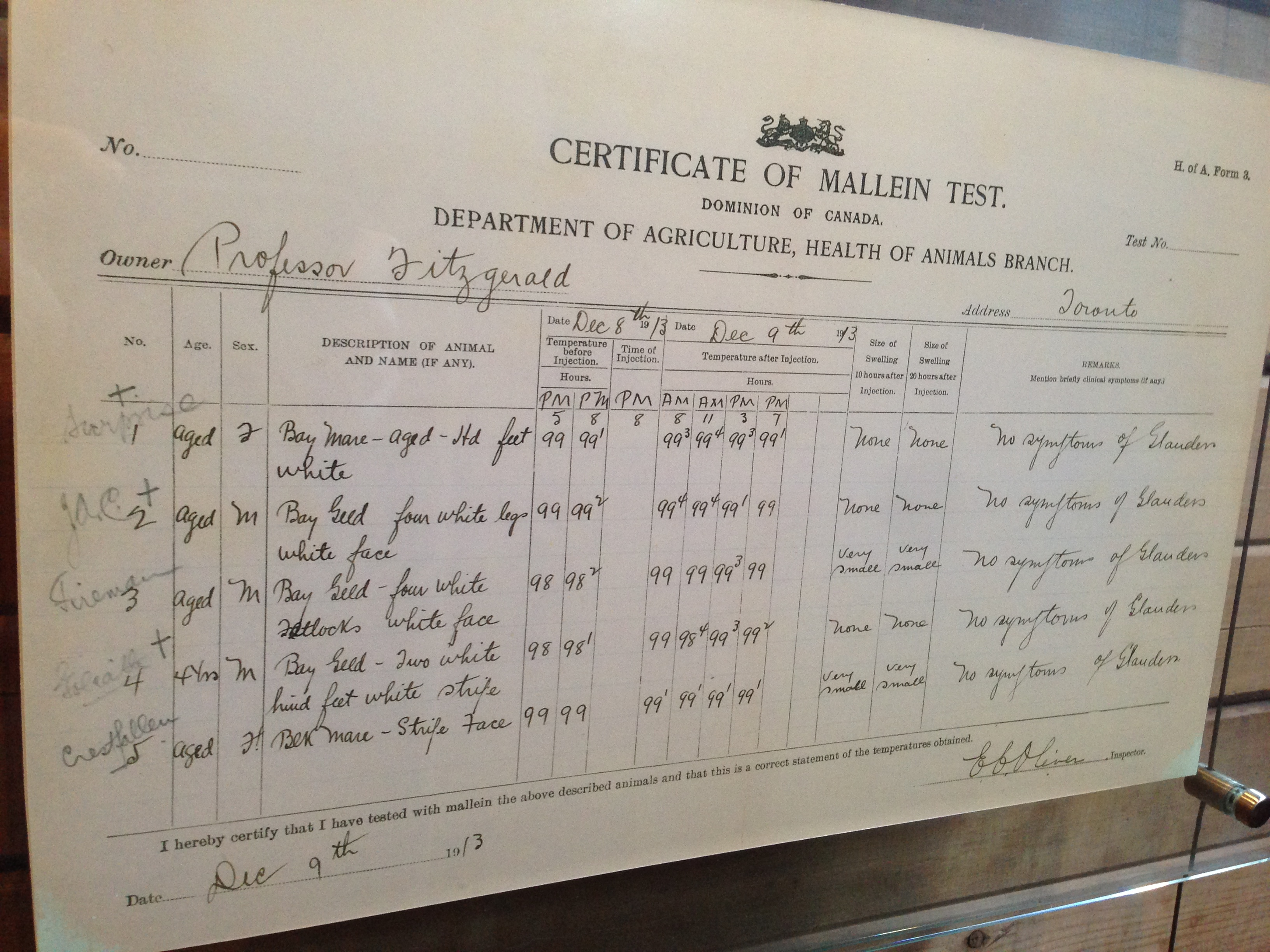 Certificate of Mallein Test of the first horses involved in diphtheria antitoxin production in the Barton Avenue Stable, December 9, 1913.