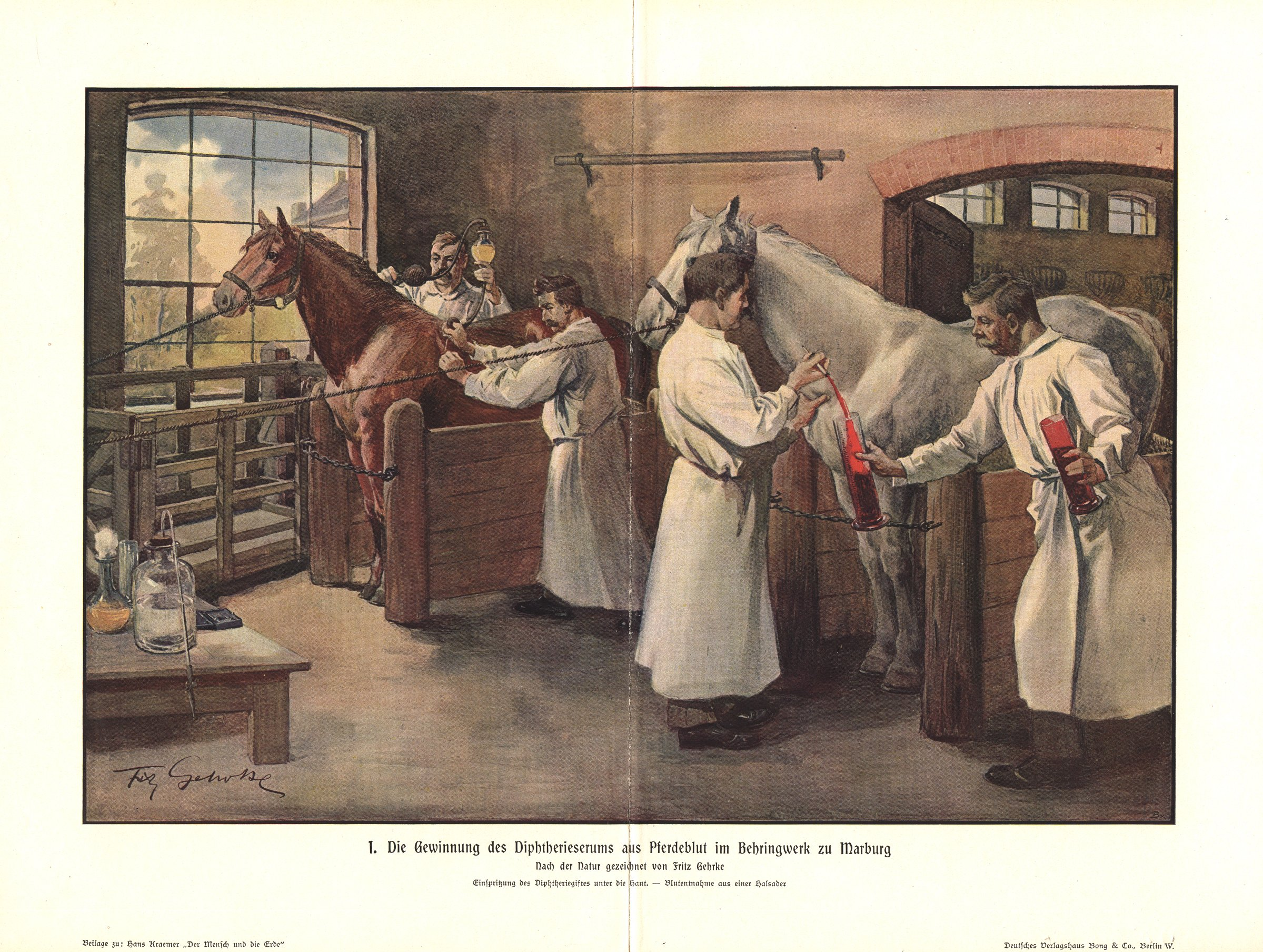 Diphtheria Antitoxin production relied on the service of horses, as depicted in this 1895 German illustration by Fritz Gerhrke.