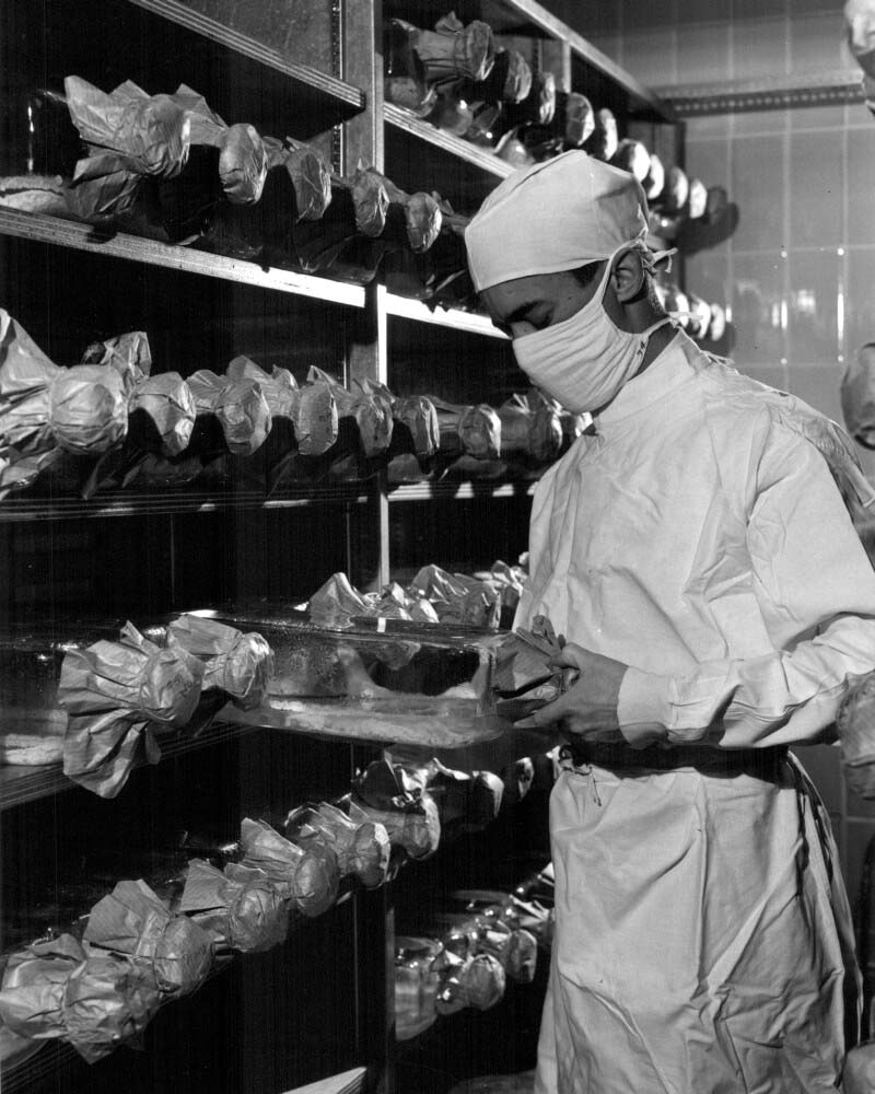 Tuberculin production at Connaught Laboratories; cultures in incubator, 1968.