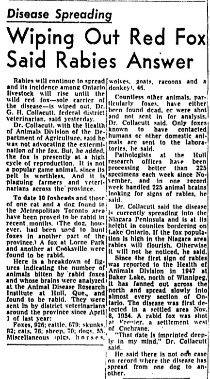 Article from the January 8, 1959, edition of the Globe and Mail describes the impact of the rabies outbreak in Ontario, especially among livestock, and the role of the red fox in its spread.